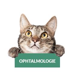 ophtalmologie-chat-chien