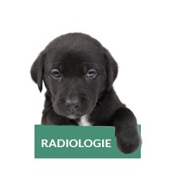 radiologie-chat-chien