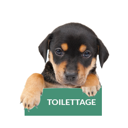 toilettage-chat-chien