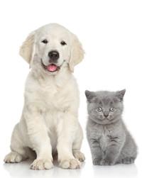 veterinaire chien chat