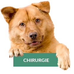 chirurgie-chien-chat