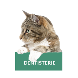 dentisterie-chat-chien