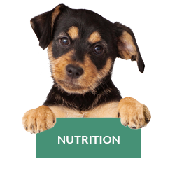 nutrition-chat-chien