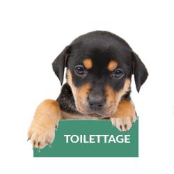 toilettage-chat-chien