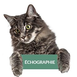 echographie-veterinaire